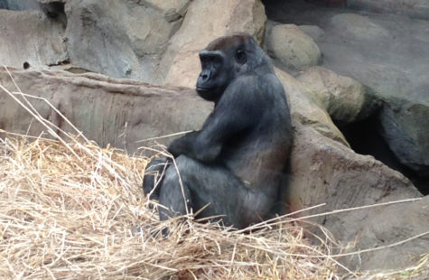 Zoo New England pushes for conservation