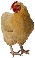 Suffolk students egg Sodexo on