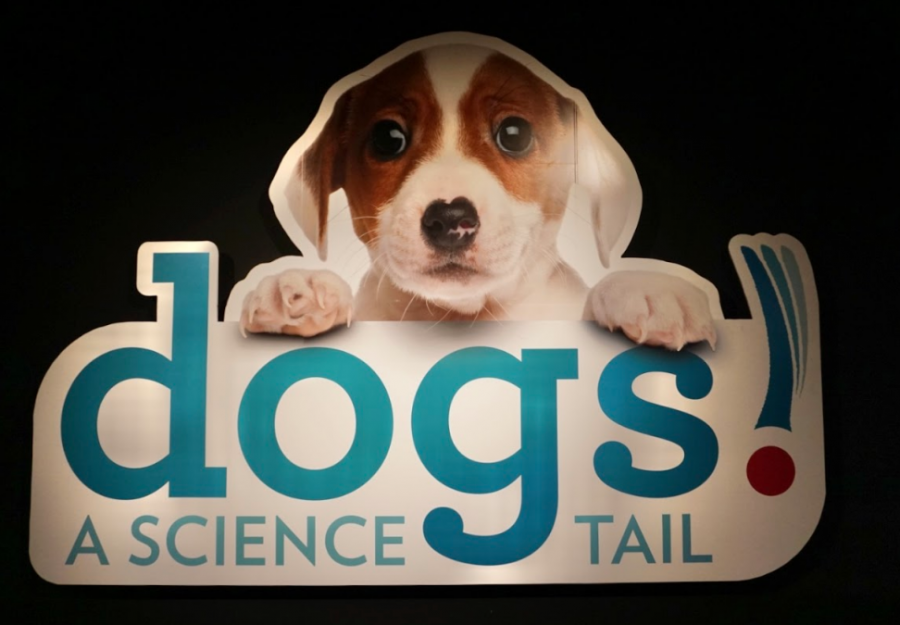 Museum of Science unleashes new canine-themed exhibit