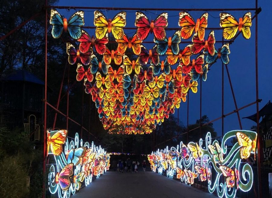 A+butterfly+light+display+at+the+Franklin+Park+Zoo.+Boston+Lights+is+unfortunately+sold+out+for+the+rest+of+the+season.