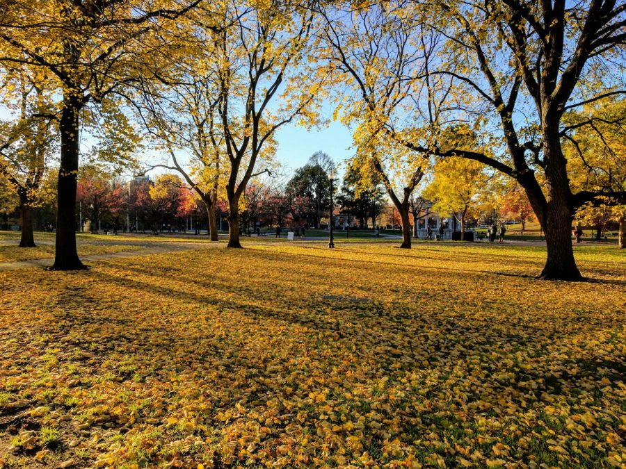 Boston Common during the fall.
