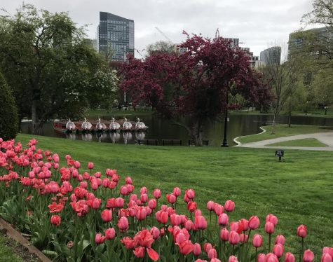 Enjoy spring in the Public Garden!