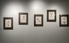 "Michelle Samour's drawings displayed at ""Poetic Botany: Artists and Plants."