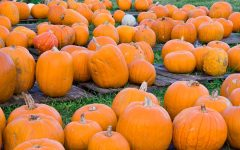 Check out these classic fall activities near campus